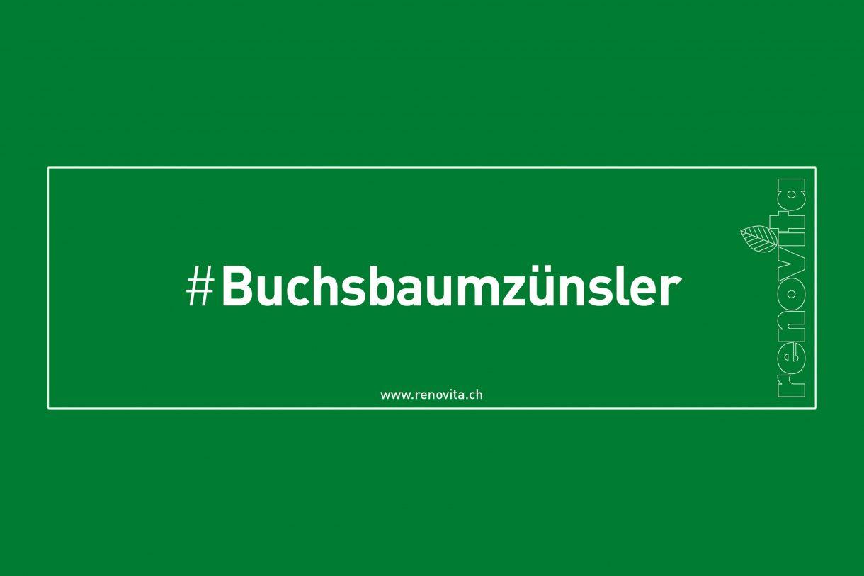 #Buchsbaumzünsler
