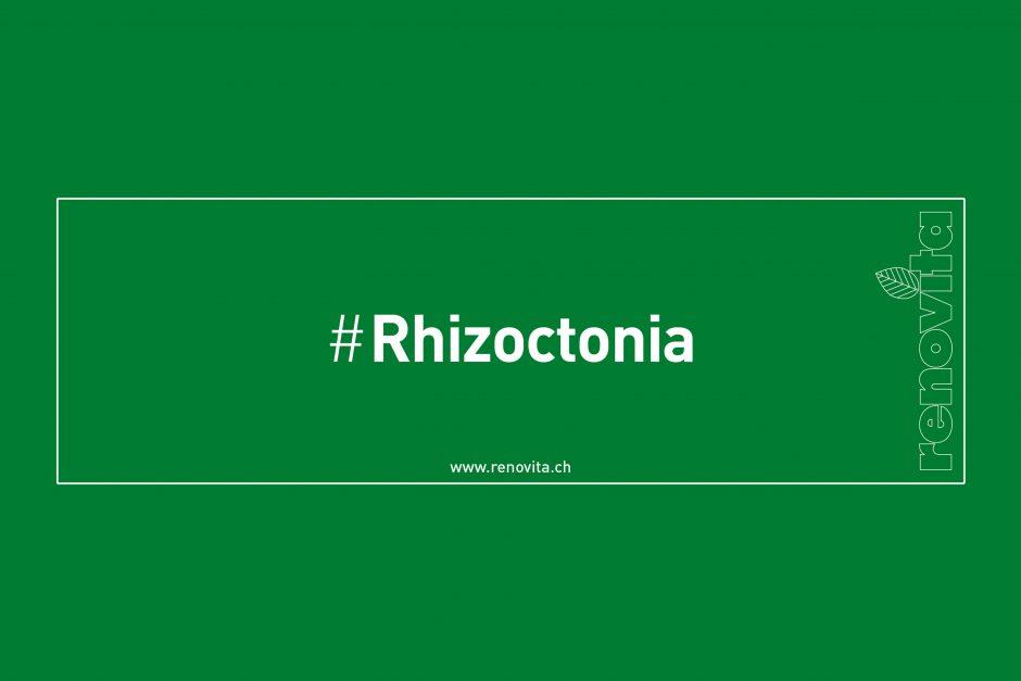 #Rhizoctonia