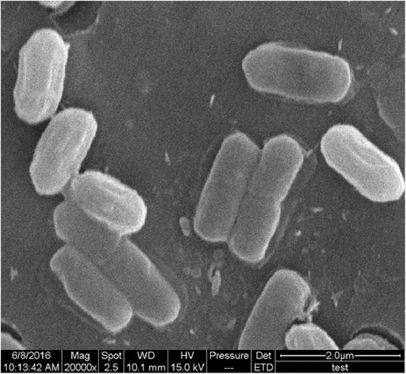 bacillus_amyloliquefaciens