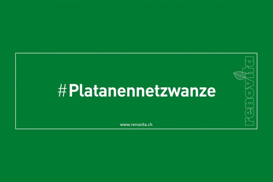 #Platanennetzwanze