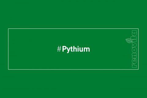 #Pythium
