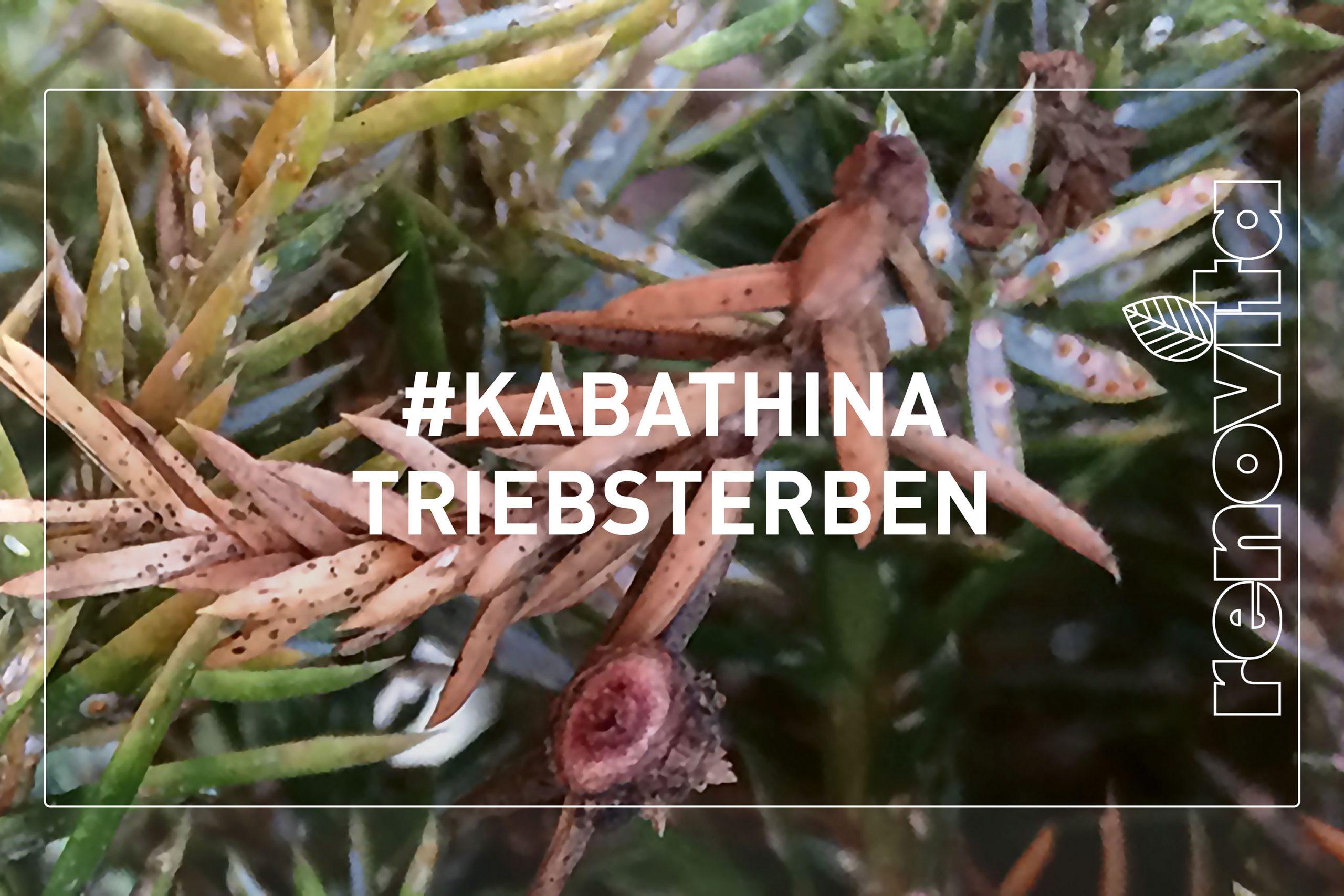 Kabathina Triebsterben